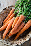 Fresh carrots bunch Stock Images