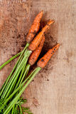 Fresh carrots Royalty Free Stock Photography