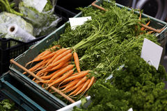 Fresh carrots in bunches. Bunches of colourful fresh carrots on display Royalty Free Stock Photography