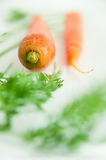 Fresh carrots with carrot leaves on white tile Royalty Free Stock Photography
