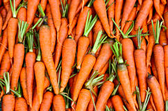 Fresh Carrots. Fresh and clean Carrot background Royalty Free Stock Images