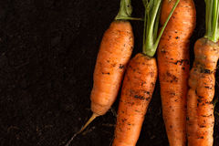 Fresh carrots on dark soil background texture Stock Images