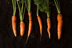 Fresh carrots on dark soil background texture Stock Photo
