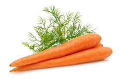 Fresh Carrots and Dill Royalty Free Stock Photo