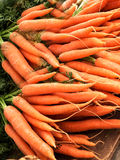 Fresh carrots Royalty Free Stock Images