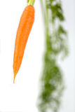 Fresh carrots on floor Royalty Free Stock Images