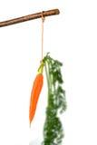 Fresh carrots on floor Royalty Free Stock Photography