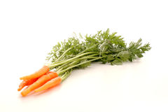 Fresh carrots from the garden. Some healthy and fresh carrots from the garden Royalty Free Stock Photos