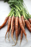 Fresh carrots from the garden brought by. Carrots from the garden on white paper Royalty Free Stock Images