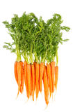 Fresh carrots with green leaves isolated on white Royalty Free Stock Photos
