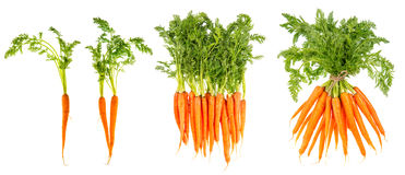 Fresh carrots with green leaves. Raw vegetable. Healthy food Stock Photos