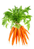 Fresh carrots with green leaves. Vegetable. Food Royalty Free Stock Photography