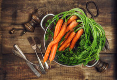 Fresh carrots with green leaves. Vegetable. Healthy food concept Royalty Free Stock Photos