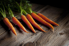 Fresh Carrots with Green Tops Royalty Free Stock Image
