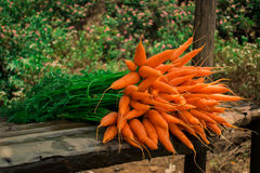 Fresh carrots. These carrots are grown in the hill station munnar in yhe infian state of kerala Stock Photography