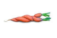 Fresh carrots isolated on the white background. Interweaving two destinies Stock Photography