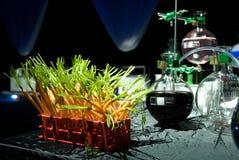 Fresh carrots in laboratory Stock Image