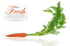 Fresh carrots with leaves Stock Images