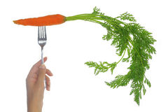 Fresh carrots with leaves Royalty Free Stock Photos