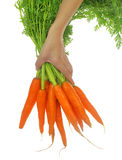 Fresh carrots with leaves Royalty Free Stock Image