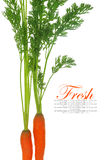 Fresh carrots with leaves Stock Photos