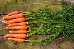 Fresh carrots with leaves Royalty Free Stock Photography