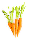 Fresh carrots. With leaves on white Royalty Free Stock Photography