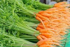 Fresh carrots Stock Image