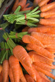 Fresh carrots on natural background Royalty Free Stock Photos