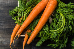 Fresh carrots. Fresh orange colored carrots with bi pinnate leaves on a dark wooden board Royalty Free Stock Photography