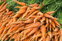 Fresh carrots picked and on display Stock Image
