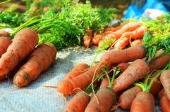 Fresh carrots. Pile of fresh carrots on stalks Royalty Free Stock Photos