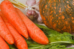 The fresh carrots, pumpkin, garlic and greens. From kitchen garden Royalty Free Stock Image