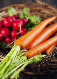 Fresh carrots and radish in the basket. Stock Image