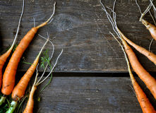 Fresh carrots with roots on a dark brown wooden surface. Top view, background. Space for text Royalty Free Stock Photography