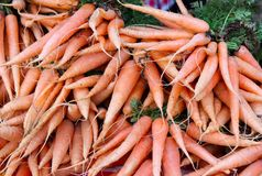 Fresh Carrots For Sale at Farmer`s Market stock images
