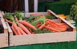 Fresh Carrots. Stock Image