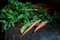 Fresh carrots on the table. Some fresh carrots with green leaves on the old table Stock Photos