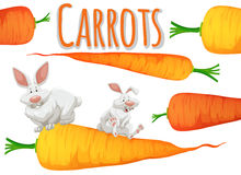 Fresh carrots and two rabbits Royalty Free Stock Photos