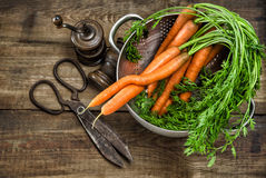 Fresh carrots with vintage kitchen utensils. Country style food Stock Images