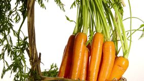 Fresh carrots stock footage