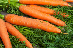 Fresh carrots on wooden background Stock Photo