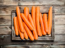 Fresh carrots on a wooden tray royalty free stock photography