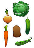 Fresh cartoon healthful isolated vegetables. Bright juicy green cucumber, cabbage, pea pod, sweet orange carrot, onion bulb and potato vegetables for agriculture Royalty Free Stock Photos