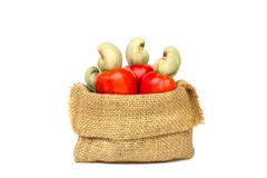 Fresh Cashew Nut pour from sack Stock Image