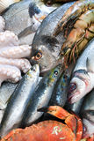 Fresh catch Royalty Free Stock Photography