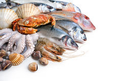 Fresh catch. Of fish and other seafood Royalty Free Stock Photography