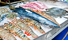 Fresh Catch. Fisherman's wares displayed fresh from the ocean Royalty Free Stock Photos