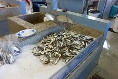 Fresh catch at a caribbean fish market Royalty Free Stock Photo