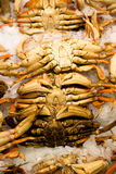 Fresh catch of crab at the Pik Stock Images